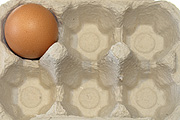 Bird, birds, chicken, chickens, hen, hens, egg, eggs, carton, cartons, egg carton, egg cartons, packaging, paper, cardboard.