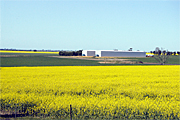 Australia, vic, victoria, agriculture, fence, fences, farm, farms, Farming, Farmland, farm, farms, Agriculture, Canola, Canola crop, canola crops, canola field, canola fields, field, fields, crop, crops, oilseed, oilseed crop, oilseed crops, Brassica, brassica napus, oil, oils, rape, rape crop, rape crops, rural, rural scene, rural scenes, australia, vic, victoria.