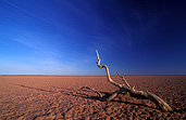 Australia, Australian, Australian desert, Australian deserts, Desert, deserts, desert scenes, simpson, simpson desert, australian outback, outback australia, national park, national parks, simpson, remote, dry, tree, trees, outback.