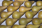 Australia, sa, south australia, adelaide, easter show, easter shows, royal easter show, royal easter shows, show, shows, entertainment, fruit, pear, pears, beurre, bosc, beurre bosc pear, beurre bosc pears, beurre-bosc pear, beurre-bosc pears.
