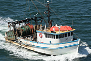 Australia, New South Wales, fishing, commercial, commercial fishing, boat, boats, boating, transport, trawler, trawlers, fishing trawler, fishing trawlers.