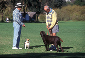 People, man, men, male, males, old man, old men, old people, elderly, elderly people, elderly man, elderly men, old, elderly, aged, animal, animals, dog, dogs, domestic, domestic dog, domestic dogs, pet, pets, centennial park, nsw, new South Wales, park, parks, australia, outdoors.