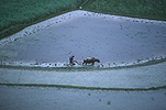 Agriculture, rice, rice growing, rice paddy, rice paddies, rice field, rice fields, paddy, paddies, China, zhou zhou, plough, ploughs, ploughing, oxen, oxens, Guiyang.