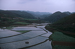 Agriculture, rice, rice growing, rice paddy, rice paddies, rice field, rice fields, paddy, paddies, China, zhou zhou, plough, ploughs, ploughing, oxen, oxens, Guiyang, terrace, terraces, rice terrace, rice terraces, terracing, rice terrracing.