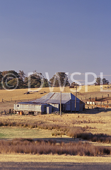 stock photo image: Australia, New South Wales, Kingsvale, farm, farms, farming, farm land, farming land, rural, rural scene, rural scenes, sheep, fence, fences, shed, sheds, shearing shed, shearding sheds, GD39,