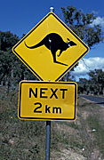 Sign, signs, road, road sign, road signs, kangaroo, kangaroos,