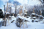 Asia, Japan, Sapporo, snow, snow scene, snow scenes, winter, tree guard, tree guards, treeguard, treeguards, tree support, tree supports, Royalty Free Image