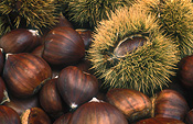 Nut, Nuts, Chestnut, Chestnuts, Food, Aesculus, sweet chestnut, sweet chestnuts, April Gold, Agriculture.