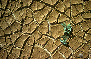Climate, weather, drought, drought scene, drought scenes, seedling, seedlings, vegetation, drought scenes, mud, cracked mud, dried mud, crack, cracks, cracked, cracking.