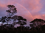 Climate, weather, rainbow, rainbows, tree, trees, silhouette, silhouettes, sunset, sunsets, sunrise, sunrises, sunrise and sunsets, WA, Western Australia, Australia.