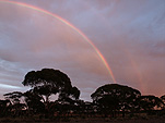 Climate, weather, rainbow, rainbows, tree, trees, silhouette, silhouettes, sunset, sunsets, sunrise, sunrises, sunrise and sunsets, WA, Western Australia, Australia, tree, trees.