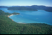Australia, qld, queensland, happy bay, long island, long island np, long island national park, national park, national parks, rainforest, rainforests, forest, forests.