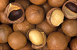 Nut, Nuts, food, Macadamia, Macadamias, macadamia nut, Macadamia nuts, Macadamia tetraphylla, Agriculture, tetraphylla, rough-shelled, rough-shelled macadamia, rough-shelled macadamias, rough-shelled macadamia nut, rough-shelled macadamia nuts, proteaceae.