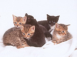 Animal, Animals, Cat, Cats, kitten, kittens, domestic cat, domestic cats, pet, pets, young animal, young animals, baby animal, baby animals, litter, litters, Australia, Sport pictures, Sports, balloon images, hot air balloons