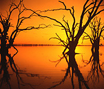 Australia, SA, South Australia, Lake Bonney, Lake, Lakes, flood, floods, flooded, flooding, water, tree, trees, silhouette, silhouettes, sunset, sunsets, sunrises and sunsets.