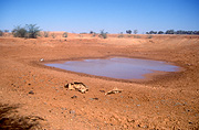 Climate, weather, drought, drought scene, drought scenes, desert, deserts, outback, australian outback, outback australia, waterhole, waterholes, disasters, natural disasters, bone, bones, skeleton, skeletons, dead, dead animal, dead animals, australia, queensland, qld, emu, emus.