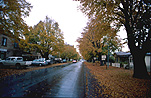 Australia, Tasmania, Tassie, Tas, Ross, street, streets, road, roads, sealed road, sealed roads, autumn, autumn scene, autumn scenes, tree, trees, autumn scene, autumn scenes.