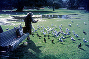 Australia, new South Wales, nsw, people, woman, women, female, females, old woman, old women, old people, park, parks, elderly, elderly people, elderly woman, elderly women, aged, old, bird, birds, sydney, seagull, seagulls, gull, gulls.