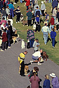 Australia, sa, RSPCA, south australia, adelaide, elder park, torrens, torrens river, river torrens, charity, charities, dog, dogs, domestic, domestic dog, domestic dogs, million paws, million paws walk, people, crowd, crowds.