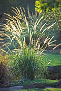 Garden, gardens, pond, ponds, garden pond, garden ponds, grass, grasses, IS47,