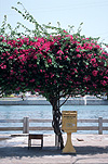 Vietnam, bougainvillea, bougainvilleas, letterbox, letterboxes, letter box, letter boxes, mail, phan tiet, communication, mail, mailbox, mailboxes, mail box, mail boxes, post, postal.