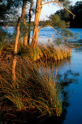 Australia, New South Wales, National Park, National Parks, Myall Lakes, Myall Lakes National Park, National Park, National Parks.