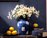 Flower, flowers, white, white flower, white flowers, daisy, daisies, lemon, lemons, citrus, citrus fruits, vase, vases, vase of flowers, vases of flowers, book, books, paper.