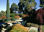 Garden, gardens, Australia, New South Wales, blue mountains, great dividing range, tree, trees.