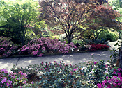 Garden, Gardens, Australia, New South Wales, blue mountains, great dividing range, footpath, footpaths, path, paths, pathway, pathways, azalea, azaleas, rhododendron, rhododendrons.