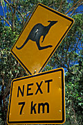 Sign, Signs, roadsign, roadsigns, road sign, road signs, kangaroo, kangaroos, warning sign, warning signs, australia, FF25,