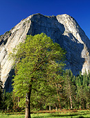 America, USA, United States, United States of America, California, National Park, National Parks, Yosemite, Yosemite NP, Yosemite National Park, mountain, mountains, tree, trees, valley, valleys, FF25,