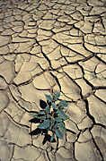 Australia, western australia, wa, gorge, gorges, geikie, geikie gorge, mud, crack, cracks, cracked, vegetation, drought, drought scene, drought scenes, desert, deserts, cracked mud, dried mud.