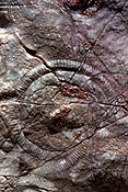 Australia, fossil, fossils, fossilized, insect, insects, moth, moths, organism, organisms, paleontology, sponge, sponges, phylum, phylums, extinct, extinction, archaeocyatha, archaeocyath, archaeocyaths, archaeocyathid, archaeocyathids, cambrian, brachina gorge, flinders ranges, flinders, range, ranges, flinders ranges np, flinders ranges national park, national park, national parks.