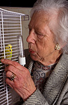 People, woman, women, female, females, old woman, old women, old people, elderly, elderly people, elderly woman, elderly women, Animal, Animals, Bird, birds, budgerigar, budgerigars, budgie, budgies, cage, cages, bird cage, bird cages, birdcage, birdcages, caged bird, caged birds, parrot, parrots, pet, pets, indoors, earring, earrings, jewellery, old, elderly, aged, Australia, Sport pictures, Sports, balloon images, hot air balloons