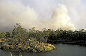 Disaster, disasters, natural disaster, natural disasters, Fire, Fires, Bushfire, Bushfires, Australia, NSW, sydney, new South Wales, smoke, dam, dams, tree, trees, forest, forests.
