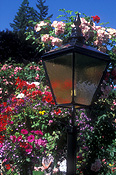 Garden, gardens, light, lights, lighting, garden light, garden lights, electricity, lamp, lamps, Flora, flower, flowers, petunia, petunias, rose, roses, rosa, butchart gardens, british columbia, vancouver, vancouver island, Canada, JW18,