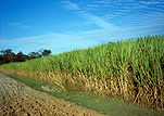 Australia, qld, queensland, farm, farms, Farming, Farmland, farm, farms, farmlands, farm land, farm land, sugar, sugarcane, sugar cane, rural, rural scene, rural scenes, cane.