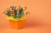 Flower, flowers, cut flowers, floral arrangements, tulip, tulips, tulipa, orange tulip, orange tulips, orange flower, orange flowers, box, boxes, packaging, present, presents, gift, gifts, Daisy Jane,