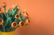Flower, flowers, cut flowers, floral arrangements, tulip, tulips, tulipa, orange tulip, orange tulips, orange flower, orange flowers, vase, vases, vase of flowers, vases of flowers, Daisy Jane,