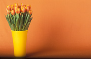 Flower, flowers, cut flowers, floral arrangements, tulip, tulips, tulipa, vase, vases, vase of flowers, vases of flowers, orange tulip, orange tulips, orange flower, orange flowers, Daisy Jane,