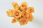 Flower, flowers, cut flowers, roses, rosa, bunch, bunches, bouquet, bouquets, rose, yellow, yellow, yellow flower, yellow flowers, yellow, Daisy Jane,