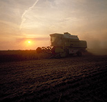 Farming, Farmland, farm, farms, Agriculture, rural, rural scene, rural scenes, crop, crops, wheat, wheat crop, wheat crops, wheat field, wheat fields, harvest, harvests, harvesting, combine harvester, combine harvesters, machine, machines, machinery, farm machinery, farm equipment, equipment, mood, mood scene, mood scenes, sunset, sunsets, sunrises and sunsets.