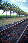 Australia, qld, queensland, farm, farms, Farming, Farmland, farm, farms, farmlands, farm land, farm land, sugar, sugarcane, sugar cane, rural, rural scene, rural scenes, cane, palm tree, palm trees, tree, trees, track, tracks, railway track, railway tracks, railway line, railway lines, rural, rural scene, rural scenes, transport, transportation, vehicle, vehicles, transportation.
