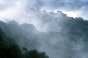 Australia, New South Wales, dorrigo, dorrigo np, dorrigo national park, mountain, mountains, mountain range, mountain ranges, mist, National Park, National Parks.