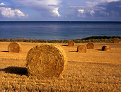 Europe, Western Europe, UK, Britain, British Isles, England, United Kingdom, Great Britain, cornwall, rural, rural scene, rural scenes, farming, straw, bale, bales, straw bale, straw bales, field, fields, am04,
