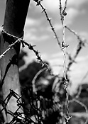 Fence, fences, barbed, wire, barbed wire, barbed wire fence, barbed wire fences.
