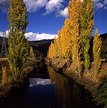 Australia, vic, victoria, beauty, mt beauty, mount beauty, autumn, great dividing range, autumn scene, autumn scenes, tree, trees, river, rivers, water, poplar, poplars, poplar tree, poplar trees, river, rivers, water, kiewa, kiewa river, valley, valleys, kiewa valley.