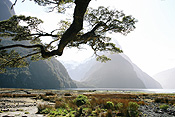 Pacific islands, new zealand, south island, milford sound, mountain, mountains, fiordland, fiordlands.