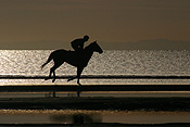 Australia, qld, queensland, sandgate, race horse, race horses, animal, animals, horse, horses, jockey, jockeys, Sport pictures, Sports, man, men, male, males, occupation, occupations, outdoors, beach, beaches, coast, coasts, coastline, coastlines, water, sandgate.