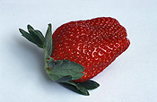 Food, Fruit, Strawberry, strawberries, Fragaria, Camerosa, Camerosa strawberry, camerosa strawberries, Berry Fruits.